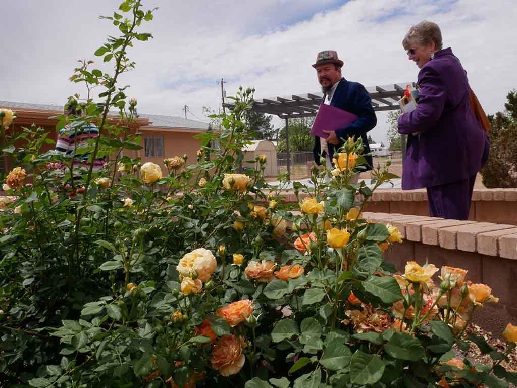 looking-at-rose-garden